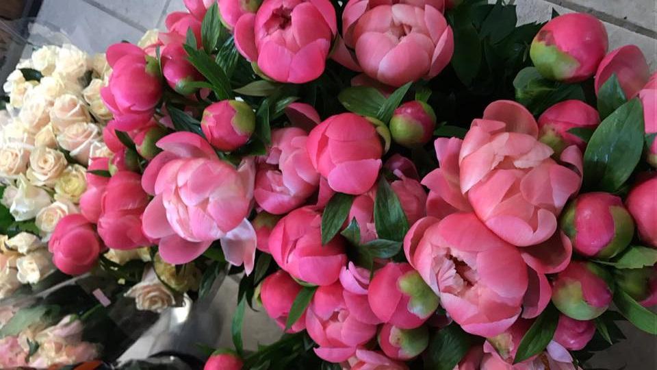 Blumen_5